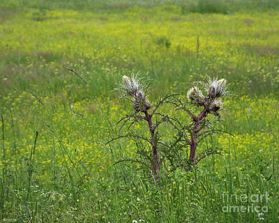 Photograph - Give A Little Thistle by Lizi Beard-Ward