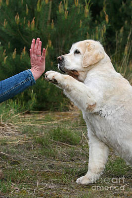 Photograph - Give Me 5 by Dog Photos