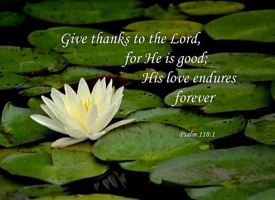 Photograph - Give Thanks  by Deena Stoddard