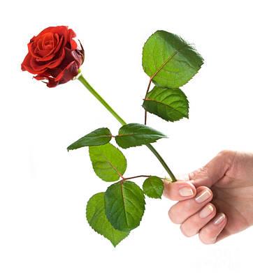 Elegant Photograph - Giving A Rose by Michal Bednarek