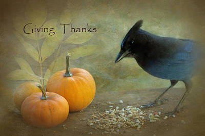 Stellers Jays Photograph - Giving Thanks by Angie Vogel