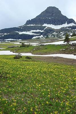 Photograph - Glacier Lilies At Logan Pass by Susan Woodward