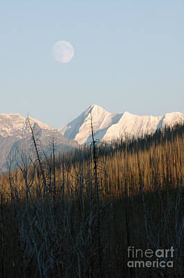 Photograph - Glacier Moon by Cindy Murphy - NightVisions