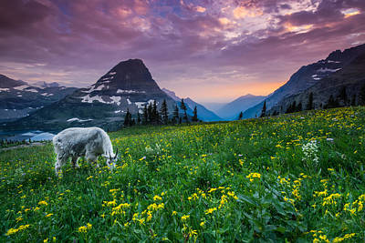 Goat Wall Art - Photograph - Glacier National Park 4 by Larry Marshall