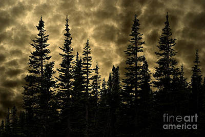 Photograph - Glacier National Park Dramatic Golden Evergreen Twilight by John Stephens