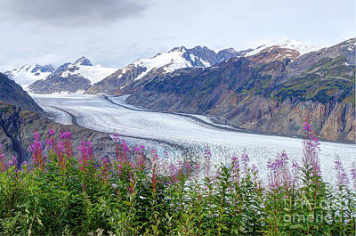 Photograph - Glacier With Fireweeds by Stanza Widen