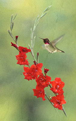 Gladiola. Red Gladiola Photograph - Glad Hummingbird by Angie Vogel