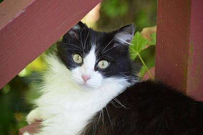 Photograph - Gladassnotmycat - Cat by rd Erickson