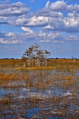 Photograph - Glades by Matthew Pace