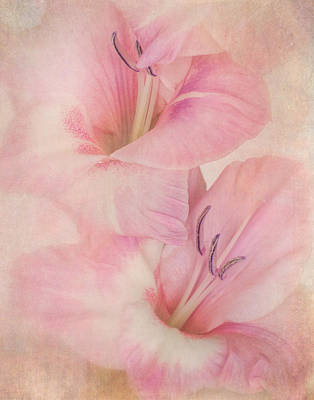 Gladiola IIi Art Print by David and Carol Kelly