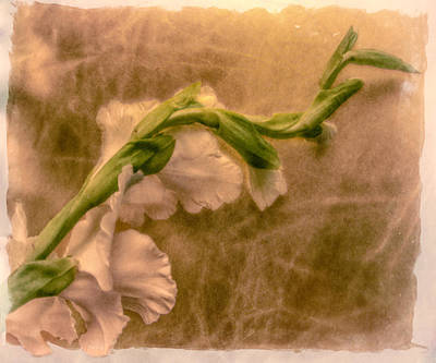 Digital Art - Gladiola by Jill Balsam