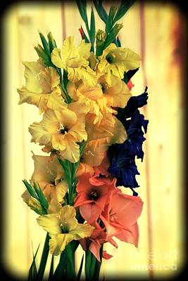 Photograph - Gladiolus  2013 by Marjorie Imbeau