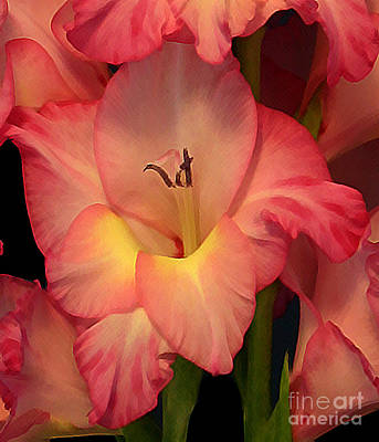 Photograph - Gladiolus  by Annlynn Ward