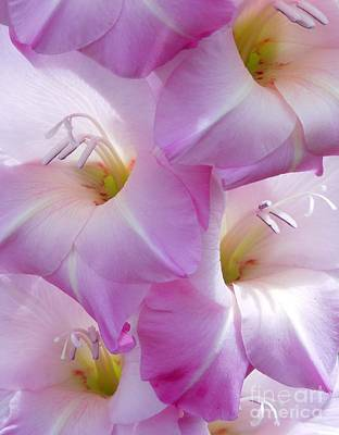 Gladiolus Art Print by Chad and Stacey Hall