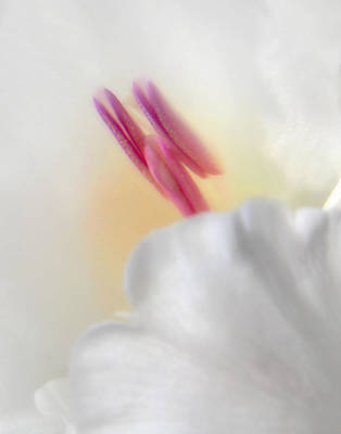 Photograph - Gladiolus Closeup by David and Carol Kelly