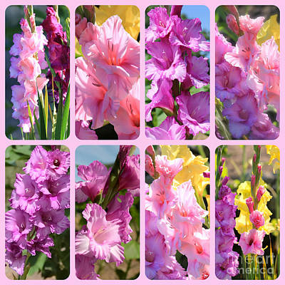 Photograph - Gladiolus In Pink Collage by Carol Groenen