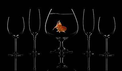 Gold Fish Photograph - Glass Fish by Saleh Swid