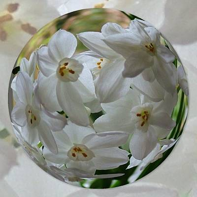 Terry Oneill - Glass Flowers Sphere by Joan-Violet Stretch