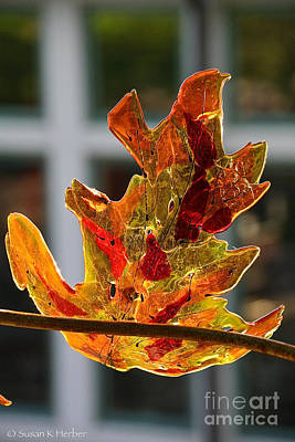 Photograph - Glass Oak Leaf by Susan Herber