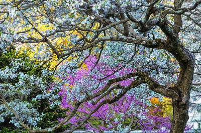 Photograph - Glen Magna Bloom by Michael Hubley