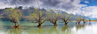 Photograph - Glenorchy Old Trees As Storm Front by Kathryn Diehm