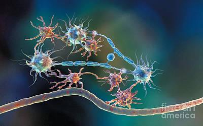 Photograph - Glia And Neurons by Hybrid Medical Animation