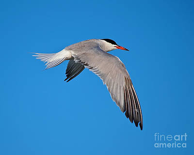 Photograph - Glide by Mark Miller
