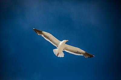 Photograph - Glide by Mike Lee