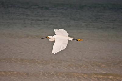 Gliding Bird Art Print by Paulina Szajek