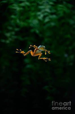 Rhacophorus Photograph - Gliding Frog In Flights by Scott Linstead