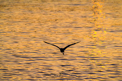 Photograph - Gliding On Gold by Silken Photography