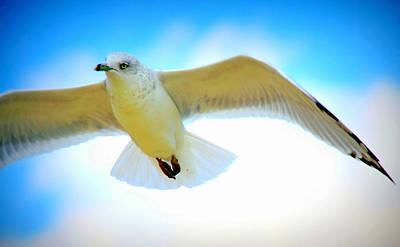 Albatross Digital Art - Gliding Seagull by Aurelio Zucco