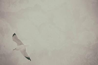 Photograph - Gliding Thru Life by Karol Livote
