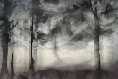 Photograph - Glimpse Of Coastal Pines by Carol Leigh
