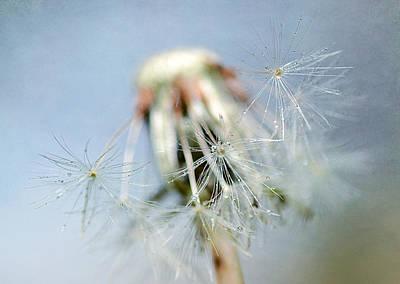 Photograph - Glisten 2 by Fraida Gutovich