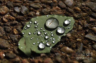 Photograph - Glistening Raindrops by Staci Bigelow