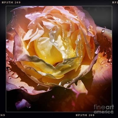 Glistening Rose Art Print