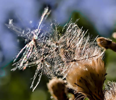 Photograph - Glittering Seeds In Sun by Leif Sohlman