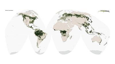 Global Forest Cover Art Print by Nasa Earth Observatory/university Of Maryland�s Global Land Cover Facility