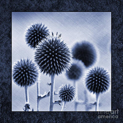 Blue Flowers Photograph - Globe Thistles by Tim Gainey