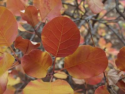 Glories Of Autumn Print by James Rishel