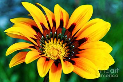 Photograph - Glorious Day Yellow Flower By Diana Sainz by Diana Raquel Sainz