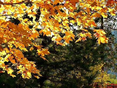Glorious Fall Afternoon Art Print by Will Borden