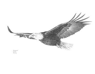 Black And White Eagle Drawing - Glorious Flight by Parampreet Grewal