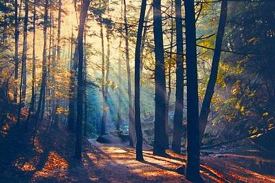 Glorious Forest Morning Art Print by Diane Alexander