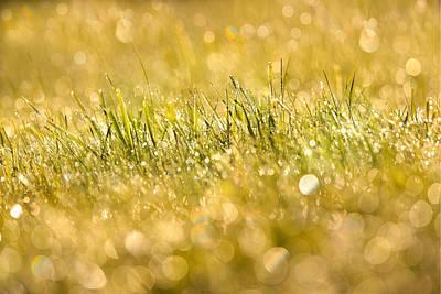 Photograph - Glorious Grass  by Bulik Elena