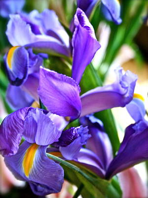 Photograph - Glorious Iris by Ruth Edward Anderson