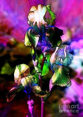 Glorious Irises Art Print by Carol Groenen