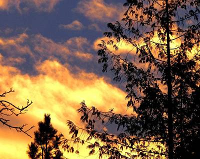 Photograph - Glorious January Sunset by Will Borden
