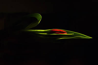 Photograph - Glorious Light by Elsa Marie Santoro